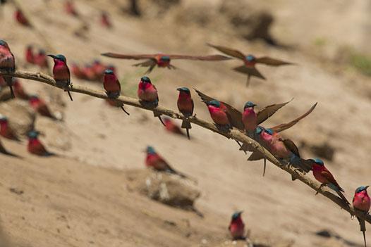 Luangwa Zambezi Explorer, South Luangwa National Park 4 - Ultimate Wildlife Adventures
