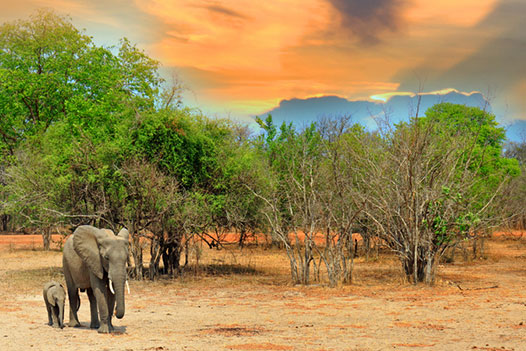 Luangwa Zambezi Explorer, South Luangwa National Park - Ultimate Wildlife Adventures