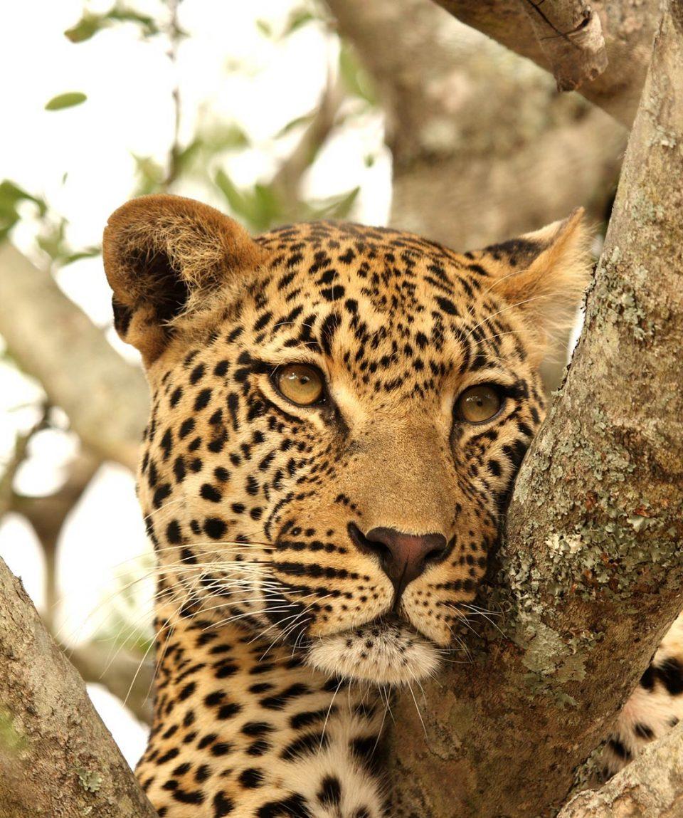 luangwa-zambezi-explorer-main-image