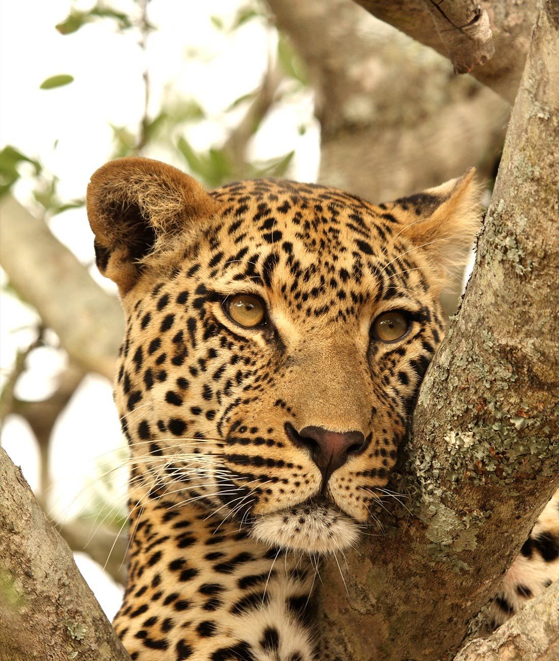 Luangwa & Zambezi Explorer - Ultimate Wildlife Adventures