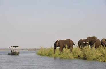 Taking a boat trip down the Zambezi River allows you to view wildlife from an entirely different perspective.
