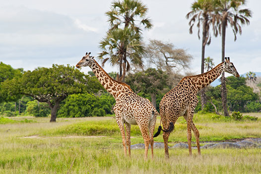 Tanzania Wild West, Katavi National Park 2 - Ultimate Wildlife Adventures