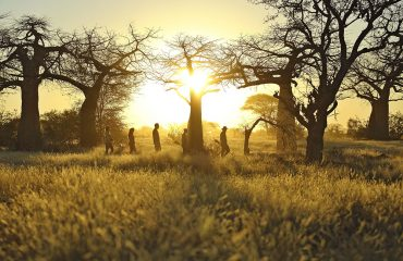 Premium quality walking adventures in Ruaha National Park