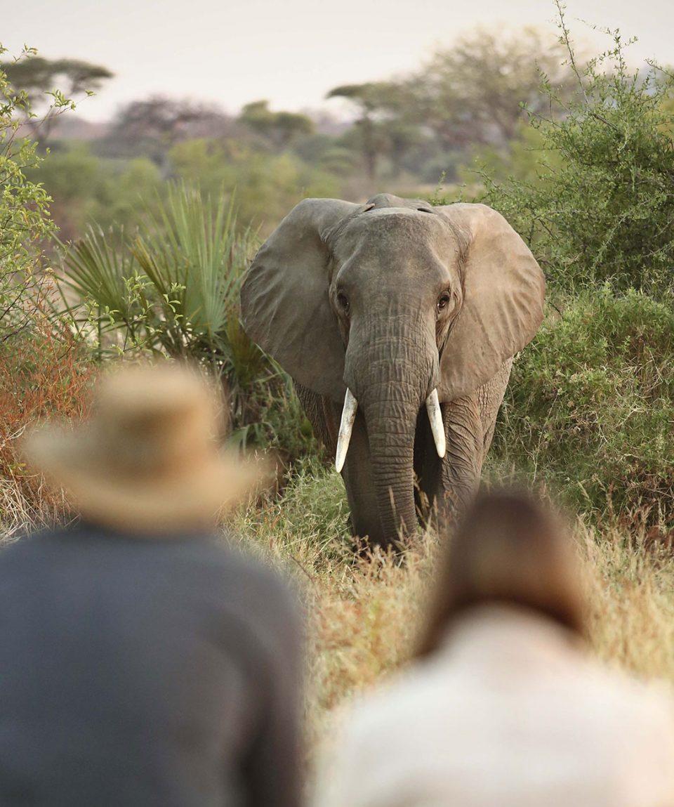 walking-with-giants-tanzania-main-image