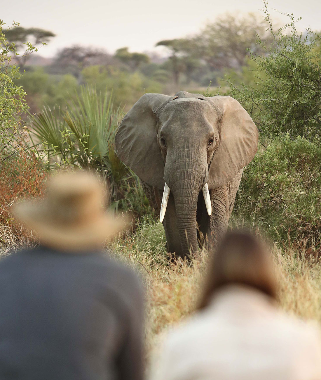 Walking with Giants Tanzania - Ultimate Wildlife Adventures