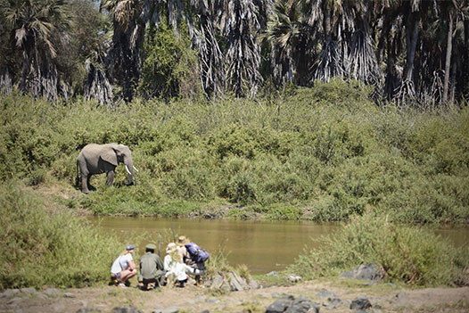 Walking with Giants Tanzania Overview - Ultimate Wildlife Adventures