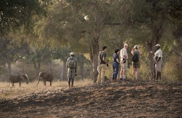 Walking safari is spectacular at Mana Pools