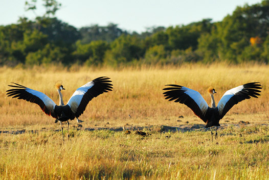 Waterfalls and Wilderness, Hwange National Park 4 - Ultimate Wildlife Adventures