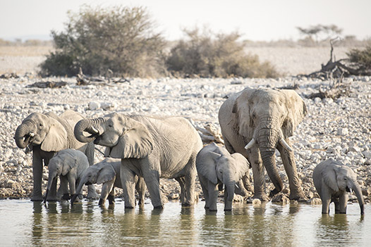 Waterfalls and Wilderness, Hwange National Park - Ultimate Wildlife Adventures