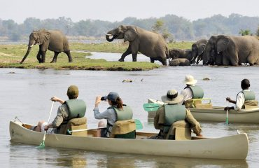 Canoeing is a great way to experience wildlife from an alternative perspective