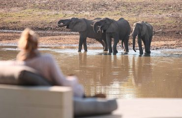 Armchair safari is a perfect way to pass an afternoon
