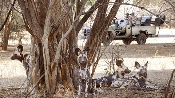 zambia-luxury-honeymoon-itinerary-2