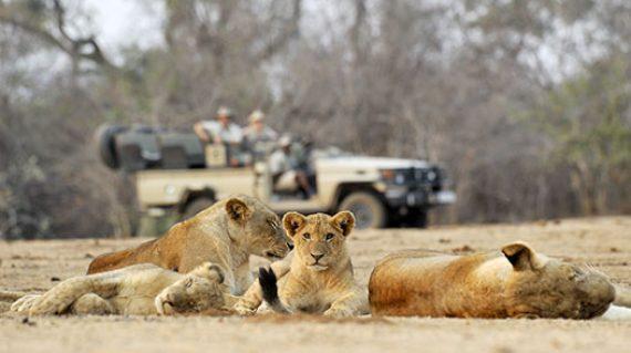 zambia-luxury-honeymoon-itinerary