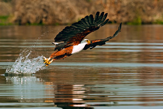 Zambia Luxury Honeymoon, Lower Zambezi National Park 3 - Ultimate Wildlife Adventures