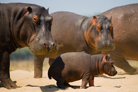 Zambia Luxury Honeymoon, Lower Zambezi National Park 4 - Ultimate Wildlife Adventures
