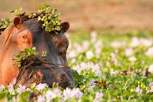 Zambia Luxury Honeymoon, South Luangwa National Park 2 - Ultimate Wildlife Adventures