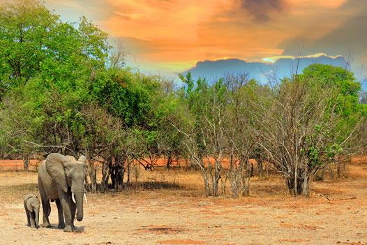 Zambia Luxury Honeymoon, South Luangwa National Park 3 - Ultimate Wildlife Adventures