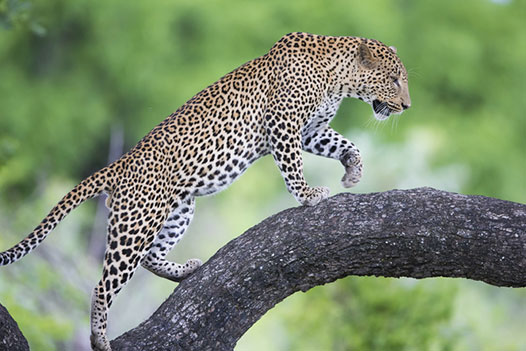 Zambia Luxury Honeymoon, South Luangwa National Park - Ultimate Wildlife Adventures