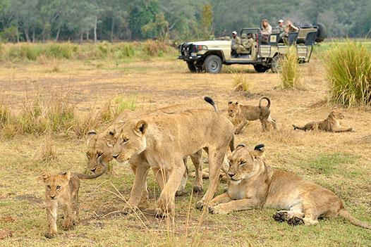 Zambia Luxury Honeymoon Overview - Ultimate Wildlife Adventures