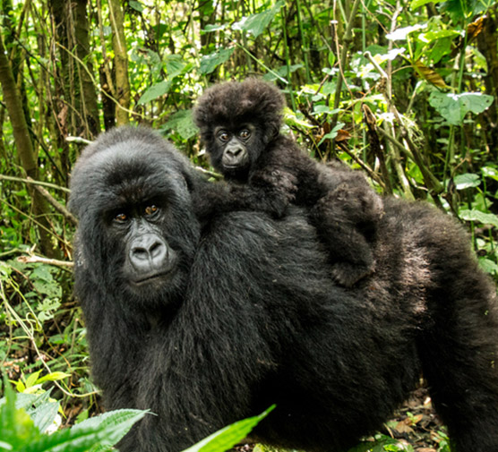 The Most Exciting Wildlife Experiences Imaginable - Ultimate Wildlife Adventures