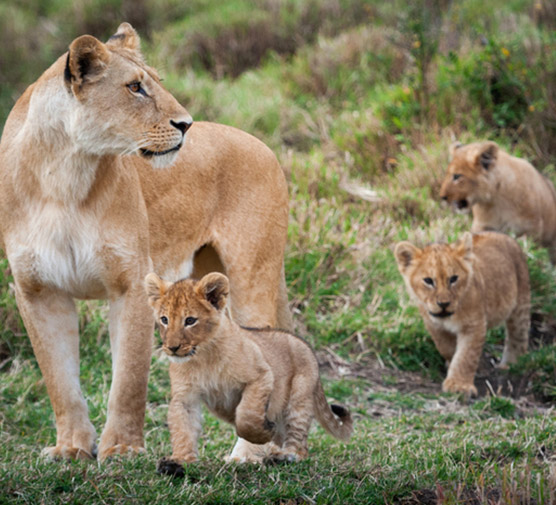 We Have The Answers - Ultimate Wildlife Adventures