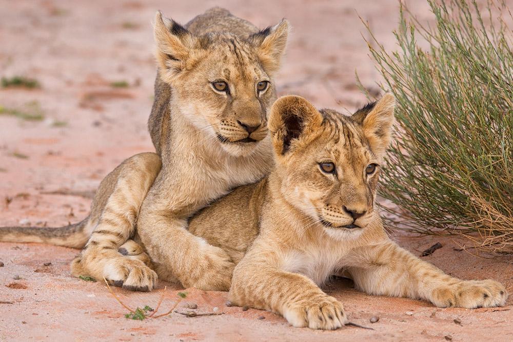 Wildlife Principle - Ultimate Wildlife Adventures
