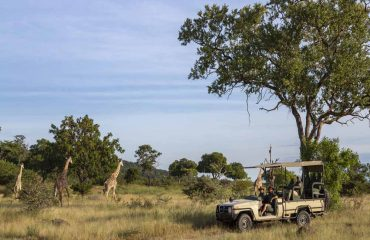 Game drives through the Selous Game Reserve are characterised by excellent game viewing and very few fellow tourists.