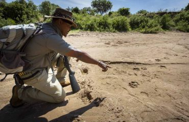 Walking safaris are not only fun but educational. Learn the signs of the bush and track big game.