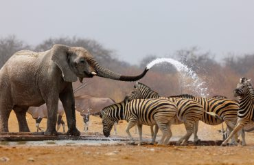 Hwange's waterholes are a great place to see an abundance and variety of wildlife in the dry season.