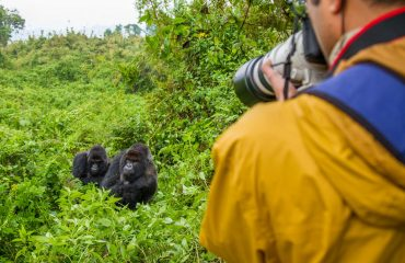 Relaxed around the presence of human beings, mountain gorillas make the most amenable photography subjects