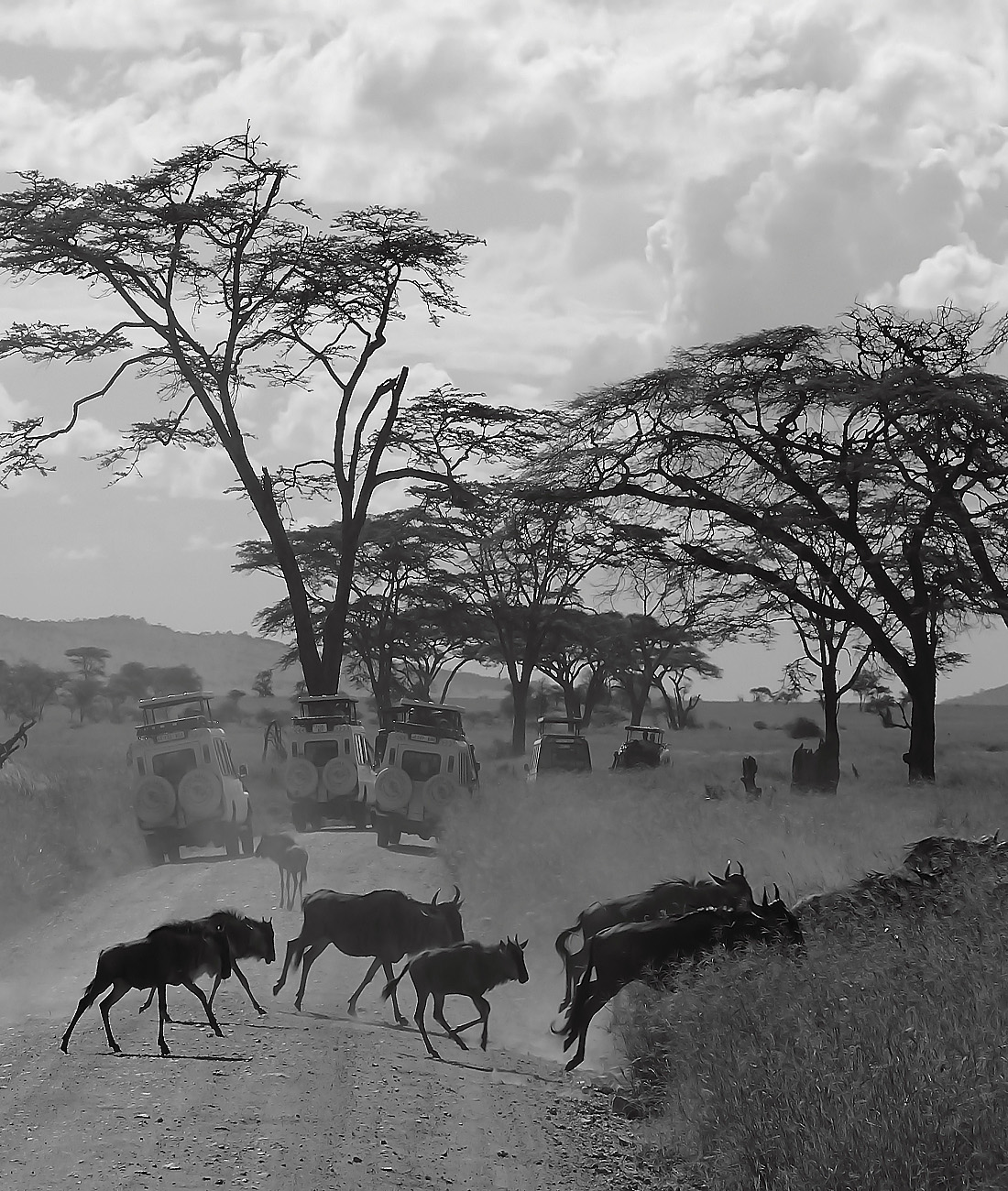 Serengeti wildebeest migration- Ultimate Wildlife Adventures