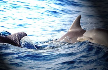 Embark on a sea voyage and you are bound to see dolphins around Cape Town's shoreline