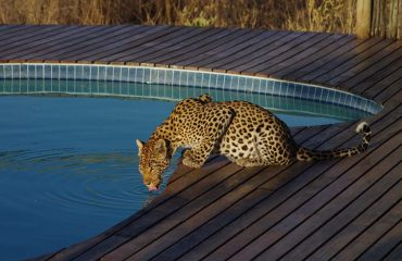 If you go down to the pool today you're sure of a big surprise!!!