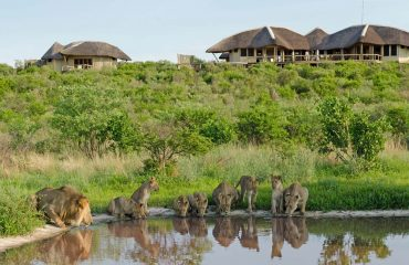 A family of lions drink from the waterhole overlooked by Tau Pan.