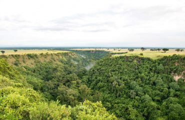 The Kyambura Gorge, home to chimpanzees, is an 11 kilometres by 1 kilometre gorge scarring the archetypal savanna of Queen Elizabeth National Park.