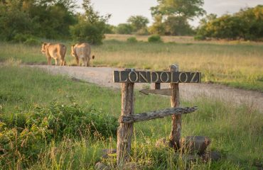 Londolozi Tree Camp welcomes all guests