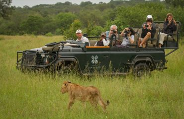 The Londolozi Private Game Reserve offers exceptional big cat sightings