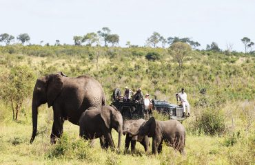 Game drives are just one of many activities offered at Londolozi Tree Camp
