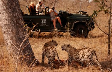 Leopard sightings are unprecedented at the Sabi Sands Game Reserve
