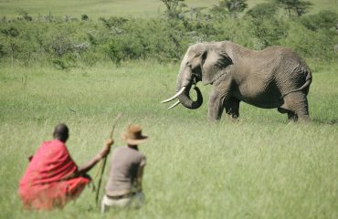 Join Masai trackers on a memorable walk in the bush