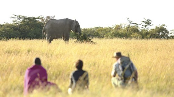 Naboisho-walking-with-elephants 526 x 351