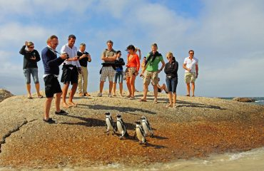 The African penguins of Boulders Beach allow visitors to approach within a metre both on land and under water