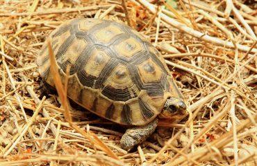 The leopard tortoise is a member of the so called Little 5 wildlife species. Can you name the other four?