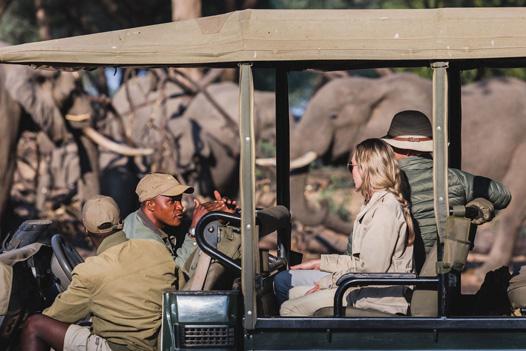 Wild Zambia Safari: Ultimate Wildlife Adventures