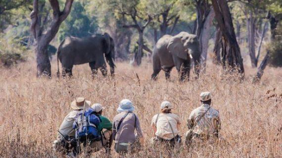 2 DI Chikoko Trails walking_ elephants
