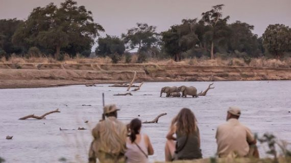 2 daily itinerary Chikoko Trails walking_elephants crossing the river