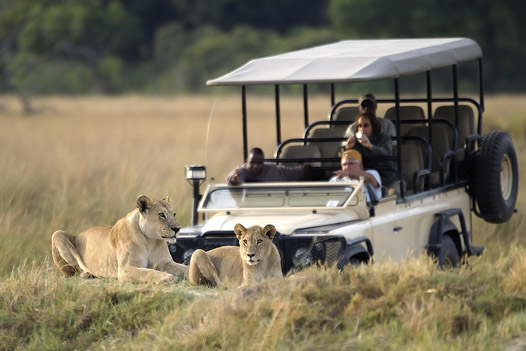 Lion sighting on a game drive